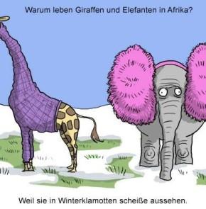 Humor zum Sonntag: Warum leben Giraffen und Elefanten in Afrika?